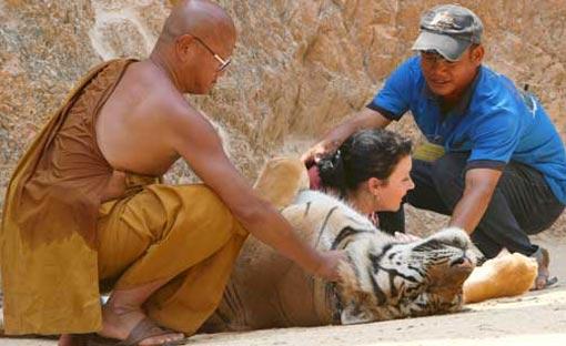 tigra1.jpg